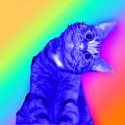 (User-LlamacornsXD)-KittyCat