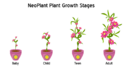 Plants-NeoPlantStages