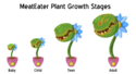 Plants-MeatEaterStages