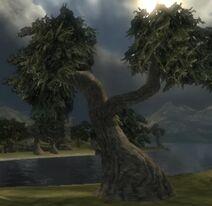 Spongewood Tree