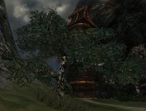 Dapplewood Tree
