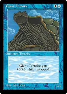 Giant Tortoise MED