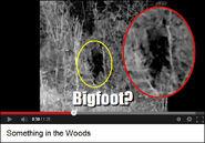 Bikfoot sighting