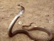 Standing snake real