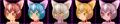 Cat Girl.png