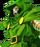 Doctor Doom/Kamekaze's version