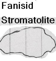 File:Fanisid stromalolite.png