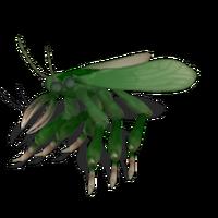 Butcherbug
