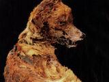 Peru's Mummy Dogs