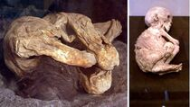 Lemon-Grove-Mummies