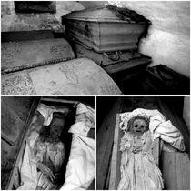 OC Mummies