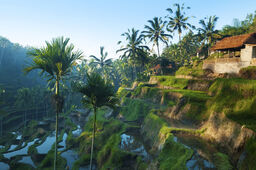Bali-indonesia 5ae3dbfe