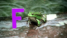 4831-Frogs