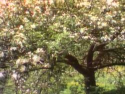0598.Appletree