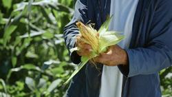 FoodieTruck-Corn02