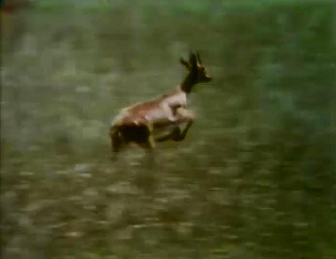 File:Film.Gazelle.jpg
