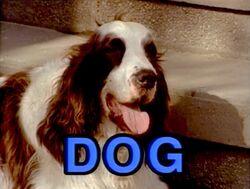 3760-Dog