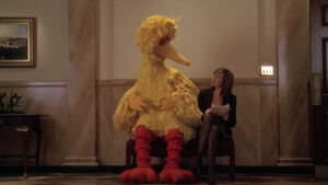 Cj and bigbird