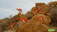 5-Kangaroos