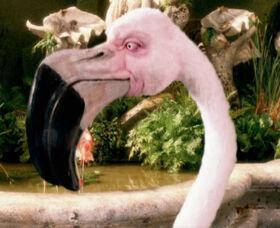 Flamingo-aw