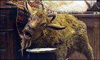 Dolittle goat