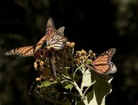ButterflyForest