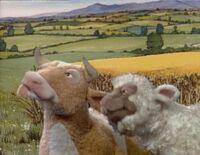 Sheep cow