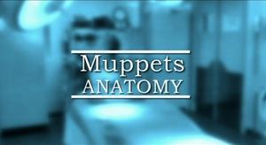 MuppetsAnatomy