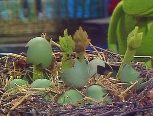 511 asparagus eggs