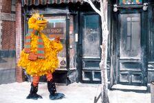 Big Bird snow Fix-It Shop