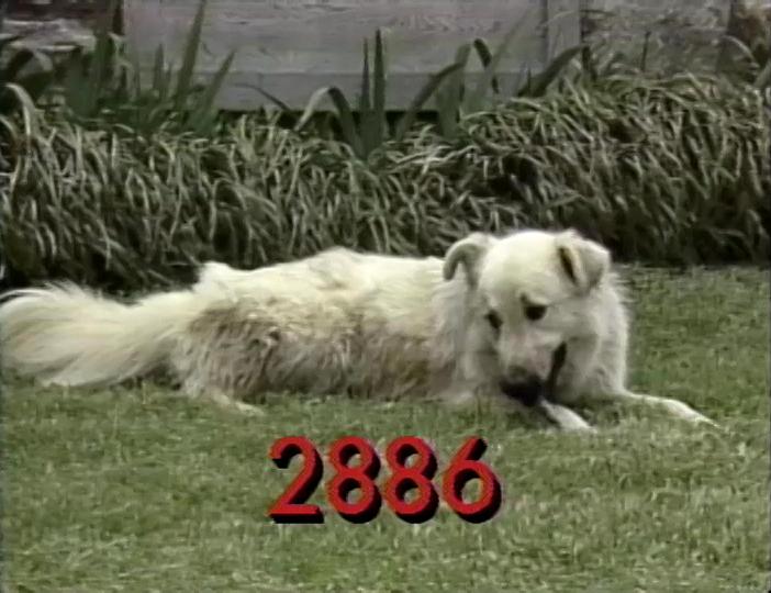 2886.jpg