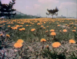 Film-FlowersEverywhere