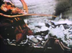 Lobstercrab
