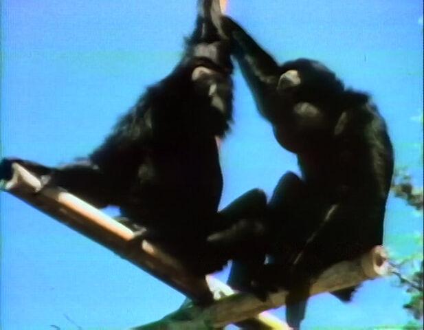 File:Gibbons.jpg