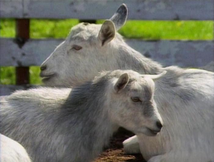 File:Raposo.Goat.jpg