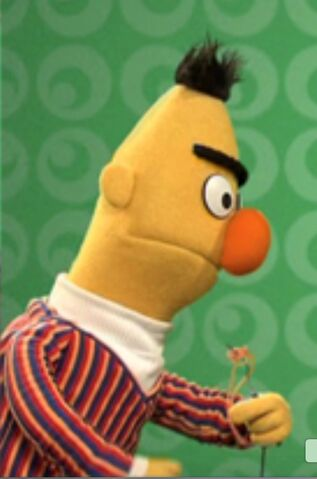 File:Bert yellow.jpeg