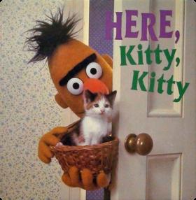 Bert Here Kitty Kitty