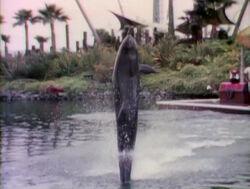 Raposo.Dolphin