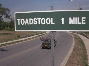 Toadstool