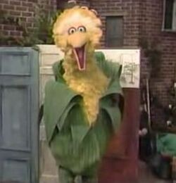 Bigbird-corn