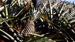 FoodieTruck-Pine02