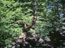 Tarzan.timepiece