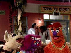 Shalom20l