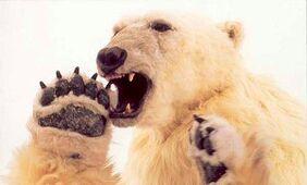 Polarbearking