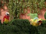 Royal Birds