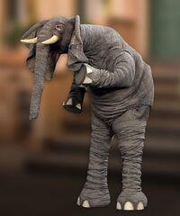 Horatio-elephant