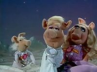 Koozebane Pigs