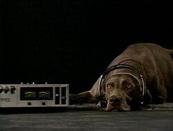 FayRay.Headphones