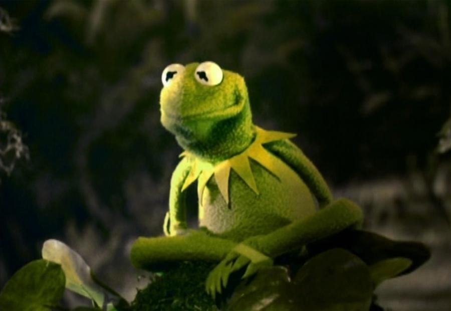 Kermit The Frog Muppet Wiki Fandom Powered By Wikia