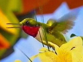 AnimalShowS3-Hummingbird